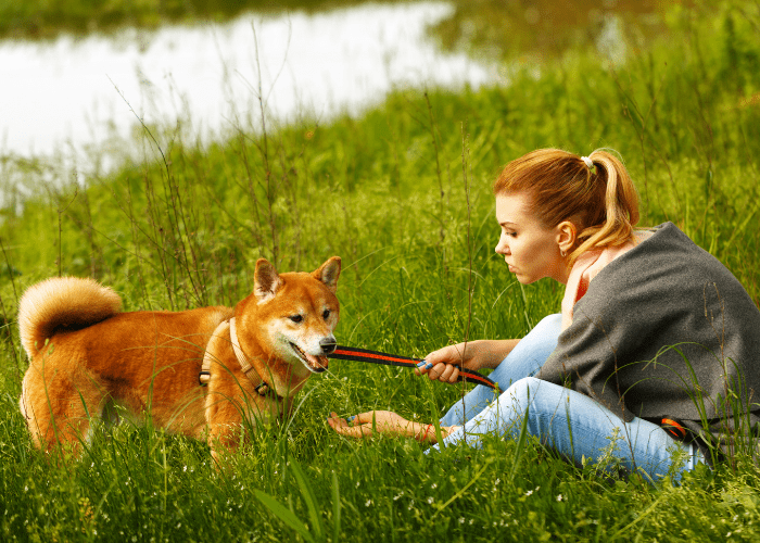 lady owner pulling the shiba inu leash towards her