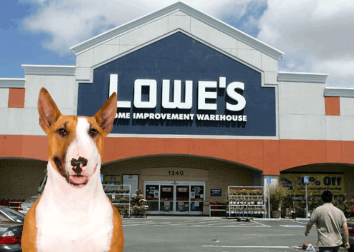 lowe's in Boston with bull terrier on the background