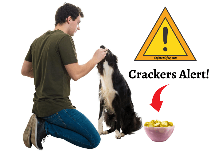 man feeding his dog with a bowl of crackers and alert sign on the background