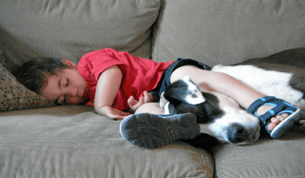 pit bull and boy sleeping on the couch with boy's left leg on dog's neck