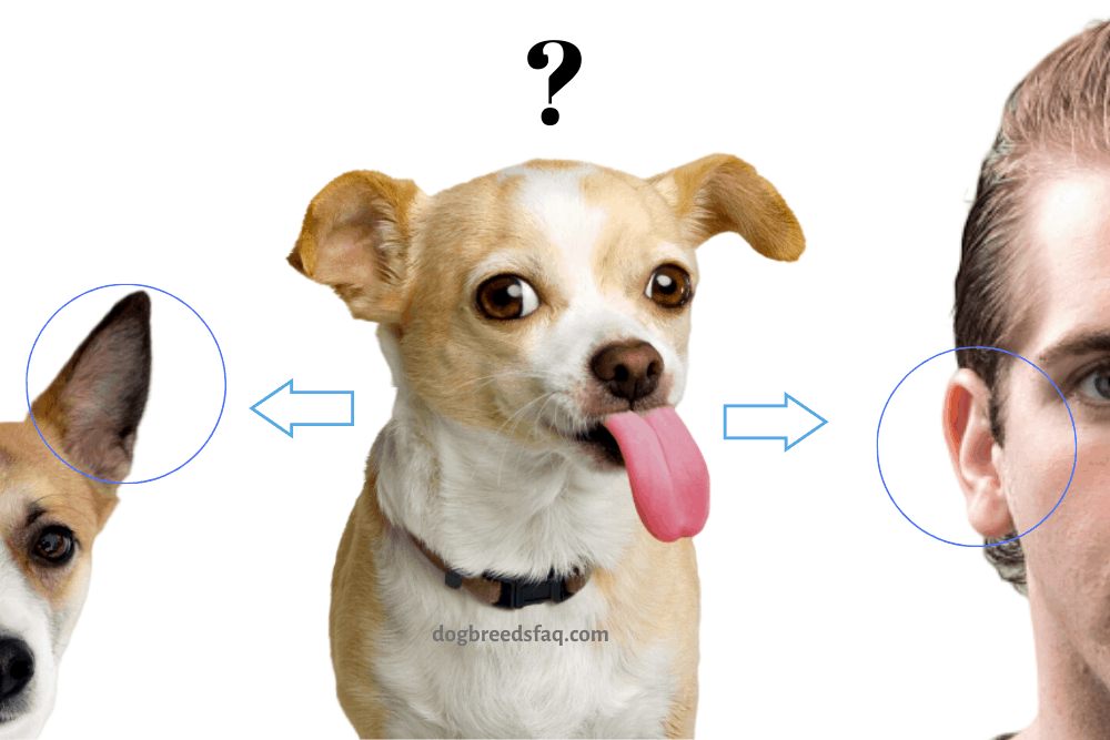 reasons why dogs lick ears illustration
