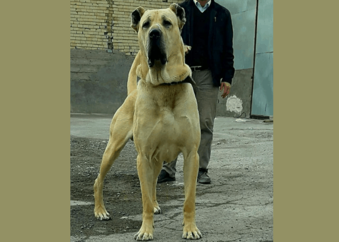 sarabi dog with owner