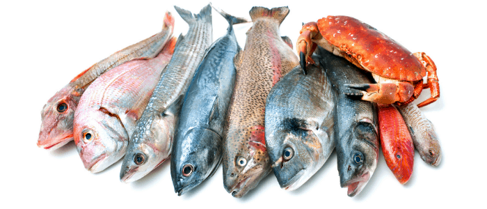 seafoods on white background