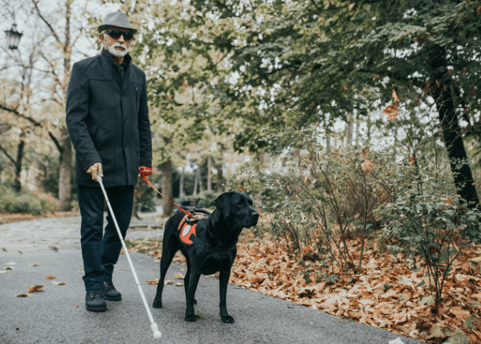 service dog guiding its blind owner