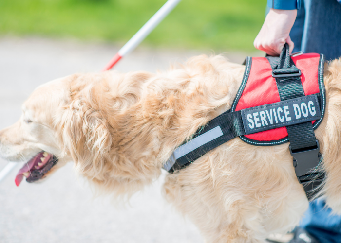 service dog with a blind person
