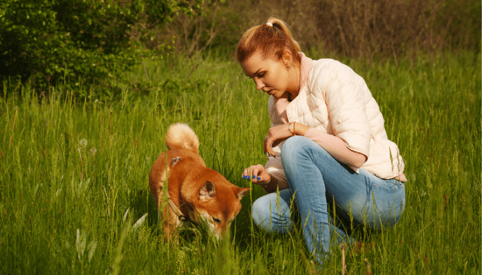 shiba and owner in the forest