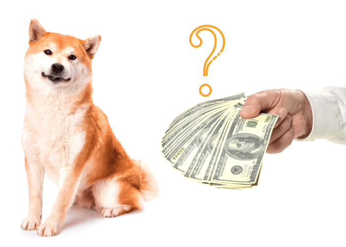 shiba inu being bought by someone
