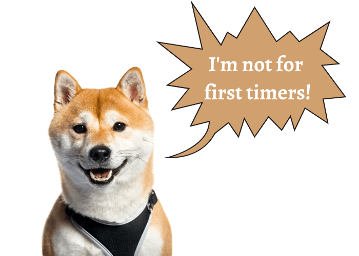 shiba inu saying that he is not for first timers