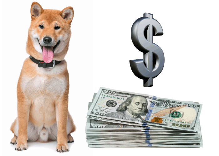shiba inu with dollar sign and notes