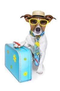 dog dressed up as a tourist with colorful bag, tie, sunglasses and a hat